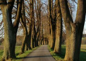 Aleje, stromořadí, cesty