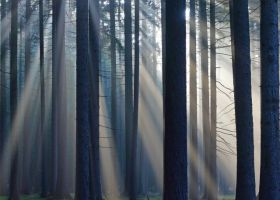 Lubom__r_Daj___slune__n___paprsky_v_lese_u_Bab__na-353-280-200-80-c.jpg
